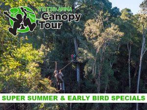 Tsitsikamma Canopy Tour Super Summer Special