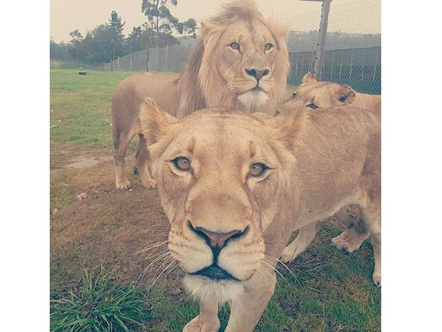 George-Lion-Reptile-Water-Park--3.jpg