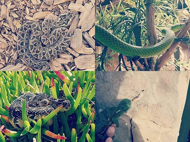 George-Lion-Reptile-Water-Park--5.jpg