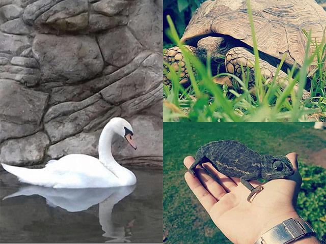 George-Lion-Reptile-Water-Park--7.jpg