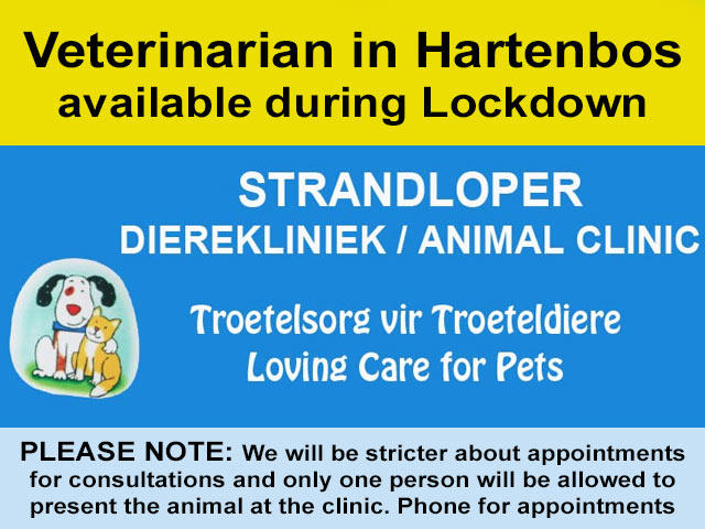 Veterinarian in Hartenbos available during Lockdown