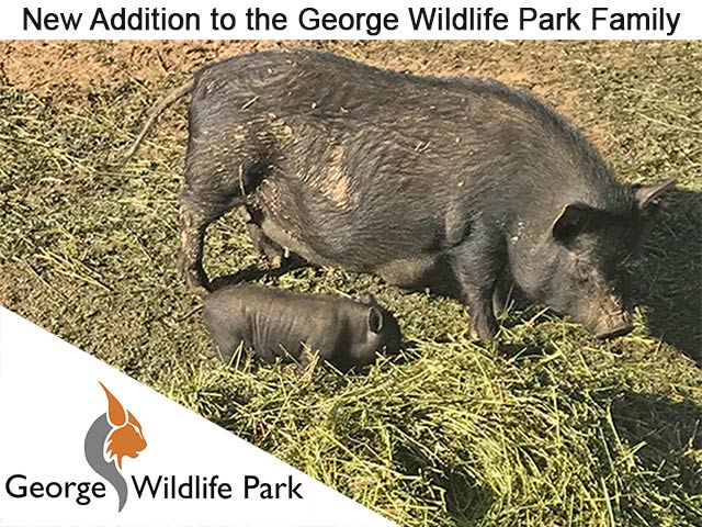 New Addition to the George Wildlife Park Family