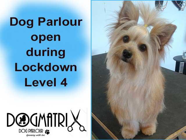 Dogmatrix Dog Parlour Open During Lockdown Level 4