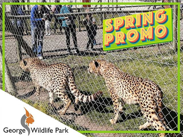 George Wildlife Park Spring Promotion