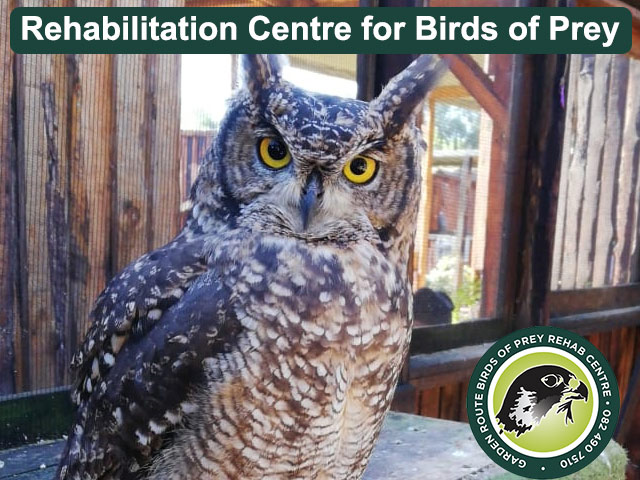 Rehabilitation Centre for Birds of Prey in George