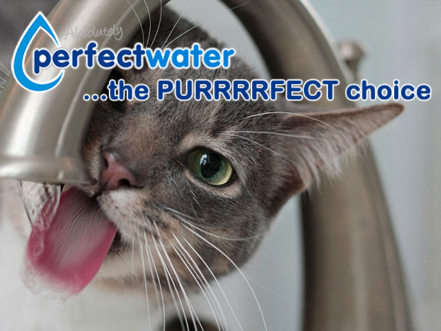 The Preferred Garden Route Purified Water Solution
