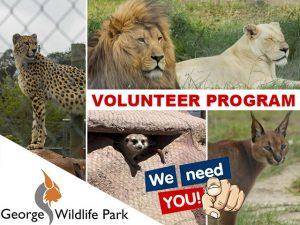 George Wildlife Park Volunteer Program