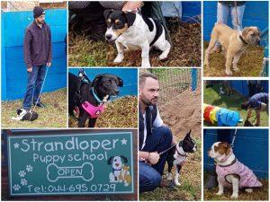 Puppy Training Classes in Hartenbos